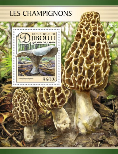 Mushrooms (Clitocybe phyllophila) | Stamps of DJIBOUTI