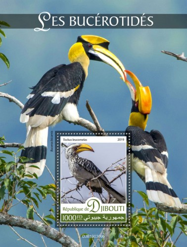 Hornbills (Tockus leucomelas) Background info: Buceros bicornis | Stamps of DJIBOUTI